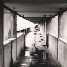 Bike tracks, Broomhall Flats. May 1978 | Photo: Tony Allwright