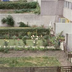 Gardens, Broomhall Flats. July 1978 | Photo: Tony Allwright