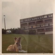 Dog and Hanover Flats on Hanover Way, 1971 | Photo: Lynn Pearson