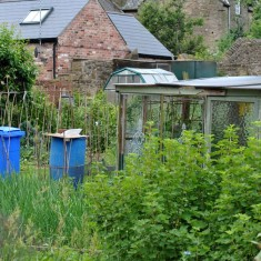 Allotments on Holberry Gardens. 2014 | Photo: Our Broomhall