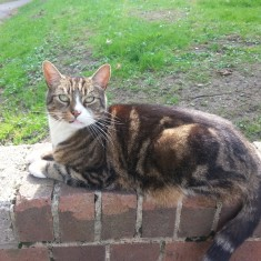One of Sue's cats on a wall outside the Hanover Flats. 2014 | Photo: Our Broomhall