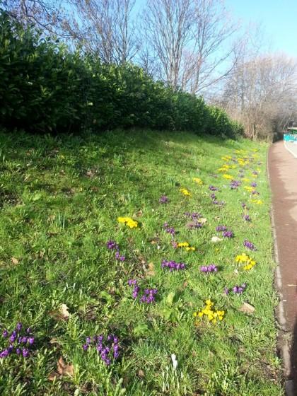 Broomhall in Springtime