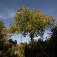 Vic's Tree