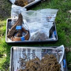 Archaeology Dig. 2015 | Photo: Julie Jackson