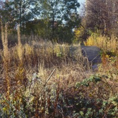 Site of Lynwood Gardens, c.1988 | Photo: Broomhall Centre